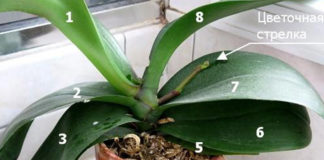 Соблюдай эти 9 правил и твоя орхидея будет цвести круглый год.