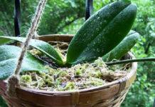 Пышное цветение гарантировано! Просто пересади орхидею в эту емкость…