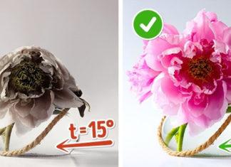 10 способов сохранить цветы в вазе свежими надолго