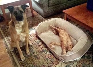 15 котов-засранцев бессовестно отобравших кроватки у бедных собачек
