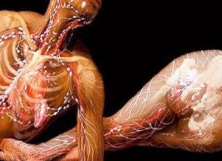 Что происходит с организмом при малоподвижном образе жизни
