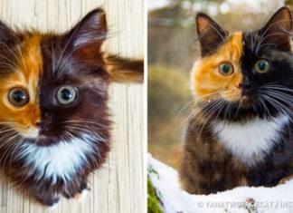 Встречайте Яну — кошку, на мордочку которой у природы не хватило краски