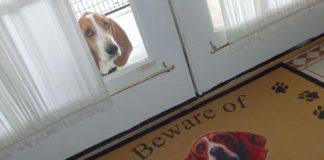 """""""Свирепые"""" псы, прячущиеся за табличками """"Осторожно, злая собака!"""""""