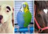 25 животных с самым необычным и красивым окрасом