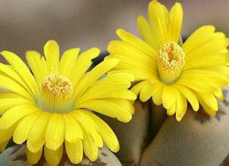 12 самых красивых и неприхотливых комнатных растений, которые сделают ваш дом уютнее