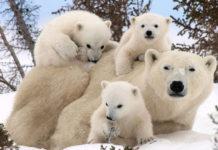 20 фотографий семей животных, которые согреют ваше сердце