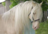 20 самых редких и красивых лошадей в мире