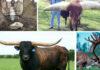 Убийственно шикарные рога