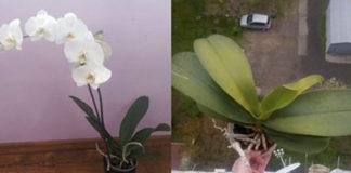 Вот почему я немедленно избавилась от орхидеи! Могут возникнуть проблемы…