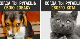 13 доказательств того, что собаки и кошки — с разных планет