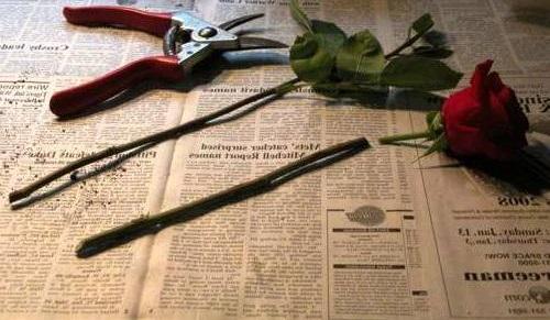 Как вырастить розу из срезанного цветка? С этим способом и садовник не нужен. Полезный совет! ?