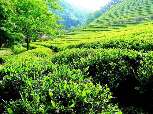 "Эти 10 полезных свойств зеленого чая заставят тебя полюбить этот напиток еще больше!</p><p> It's time to put the kettle ""/></p></div><p><strong>7. Against diabetes.</strong></p><p>Thiamine (vitamin B1) is responsible for the proper exchange of sugar in the body. By drinking green tea, you maintain a stable level of glucose metabolism.</p><p style="