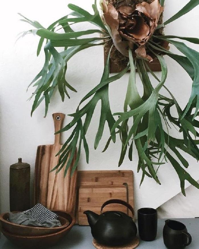 12 дивных комнатных растений, о которых ты еще не знаешь! Мечтаю о № 7. Они божественны.