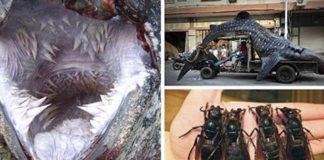 19 доказательств того, что нет ничего страшнее природы