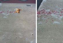 Парень бросился на помощь лежащему в крови коту