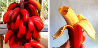 19 редчайших экзотических фруктов, о которых вы не слышали