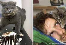 15 причин никогда не заводить котиков