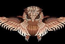 Коллекция птиц и насекомых из обнаженных человеческих тел от художницы Cecelia Webber