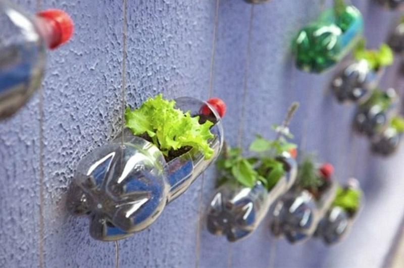 Овощи можно выращивать не на грядке, а в… бутылке! Пенсионер устроил шикарный огород на балконе.