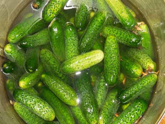 Slightly salted cucumbers in a pack