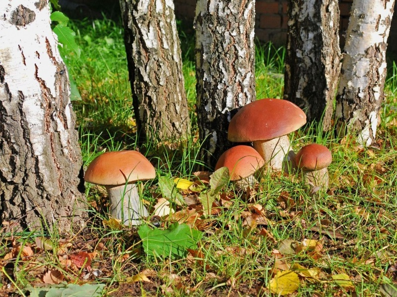 We found some white mushrooms in the forest, but instead of cooking them, we did ... Read more!