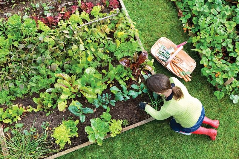Она завязала мыло в мешочки и подвесила их в саду. Результат порадовал незамедлительно!