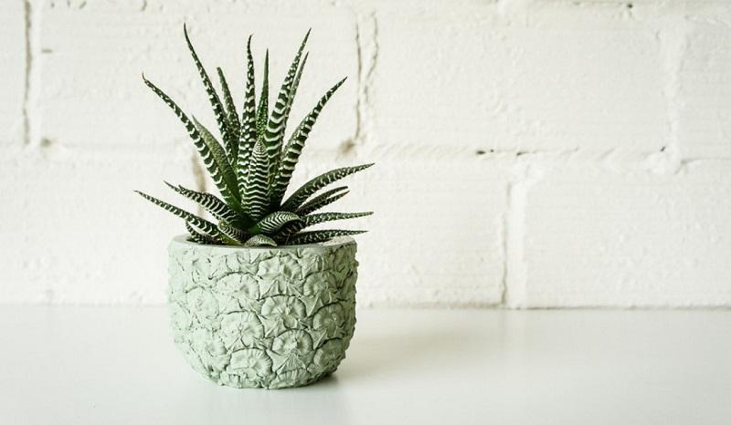 Вот какими комнатными растениями стоит обзавестись, чтобы наполнить дом хорошей энергетикой