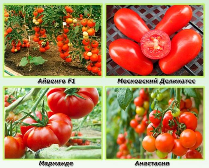 Когда сеять томаты на рассаду в 2018 году по лунному календарю 26