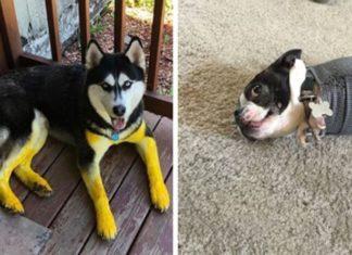 20 фотографий собак, которые попали в неловкие ситуации, но нисколько об этом не жалеют
