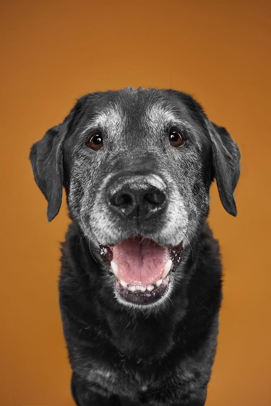 Пара фотографов делает шикарные портреты собак разных пород, раскрывая их индивидуальные черты