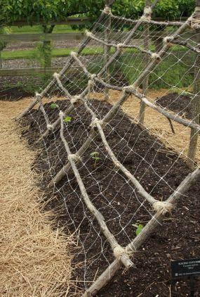 Секретный прием выращивания грунтовых огурцов: урожайность больше, а усилий меньше