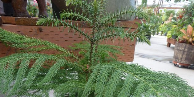 20 Неубиваемых Домашних Растений, Которые Выживут Почти Без Ухода