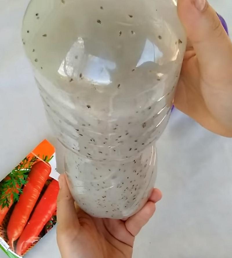 Хитрая посадка моркови: семена, бутылка — и корнеплоды даже прореживать не нужно. Минимум возни, отличный урожай.