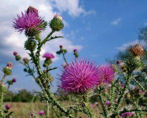 Гид по сорнякам: фото, виды, названия, меры борьбы