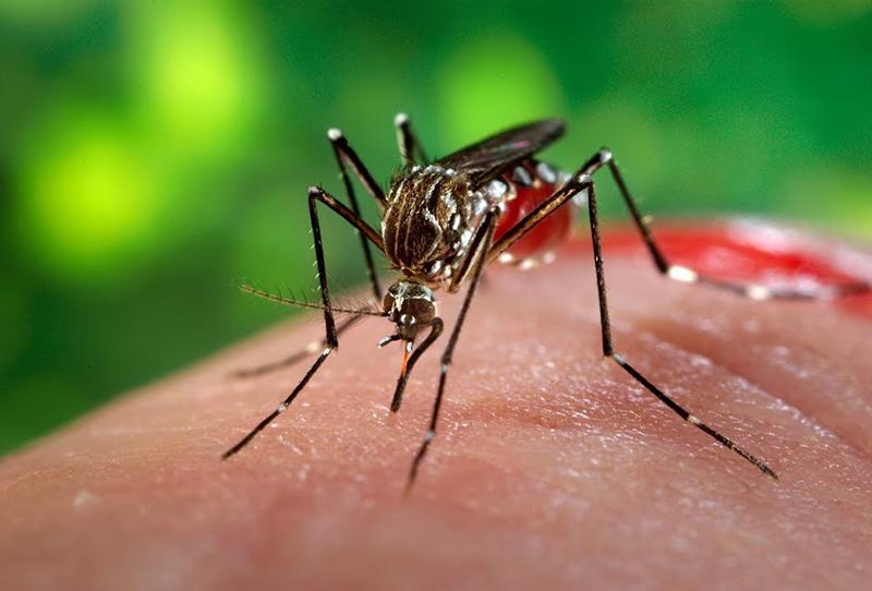 Как убрать укус комара за 20 секунд