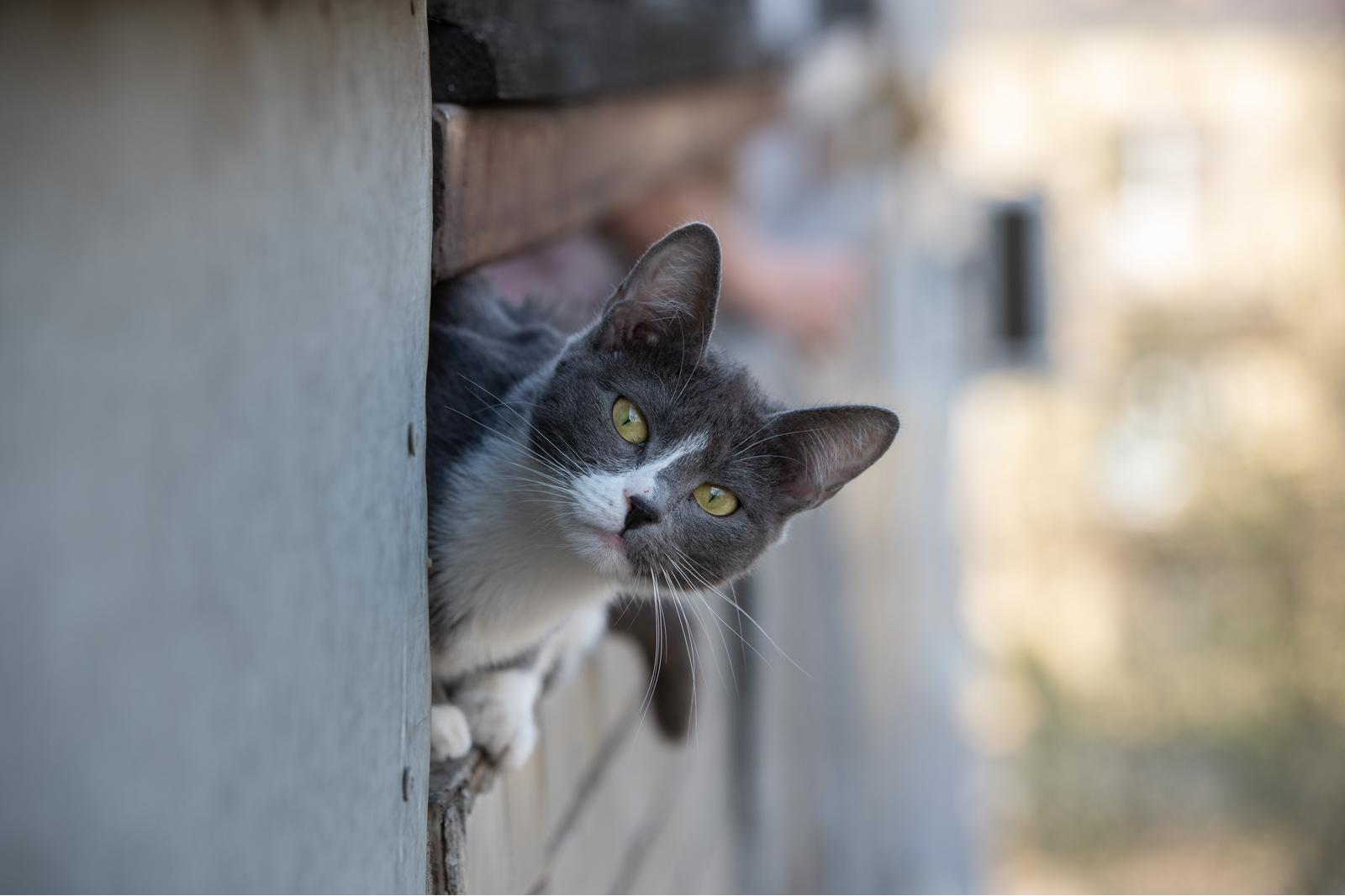 кошки седеют
