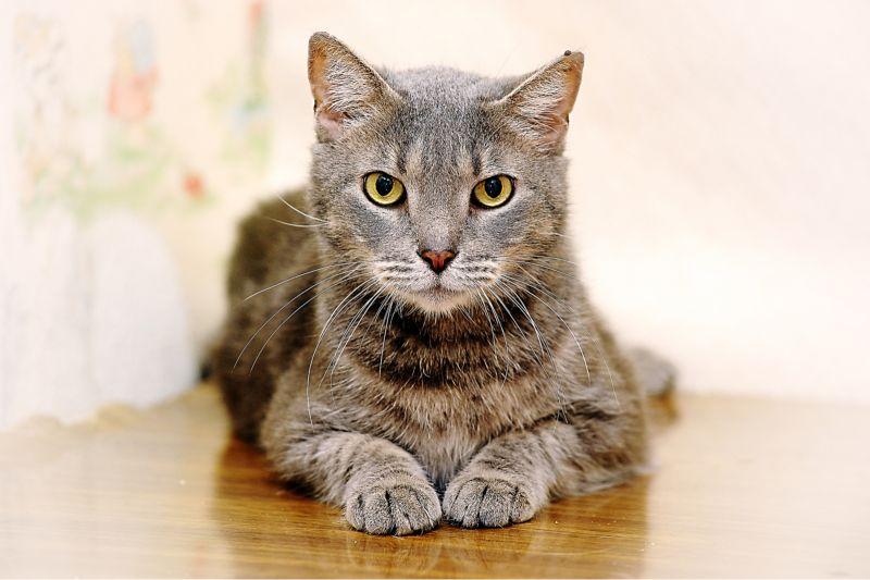 почему кошки седеют