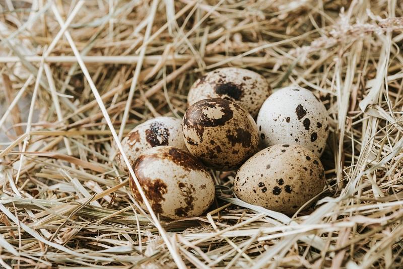 Зачем мариновать яйца в уксусе