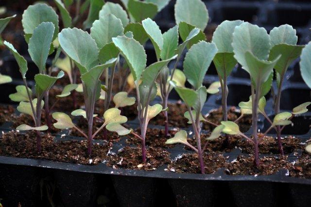 Лунный календарь 2020: благоприятные дни для посева семян на рассаду