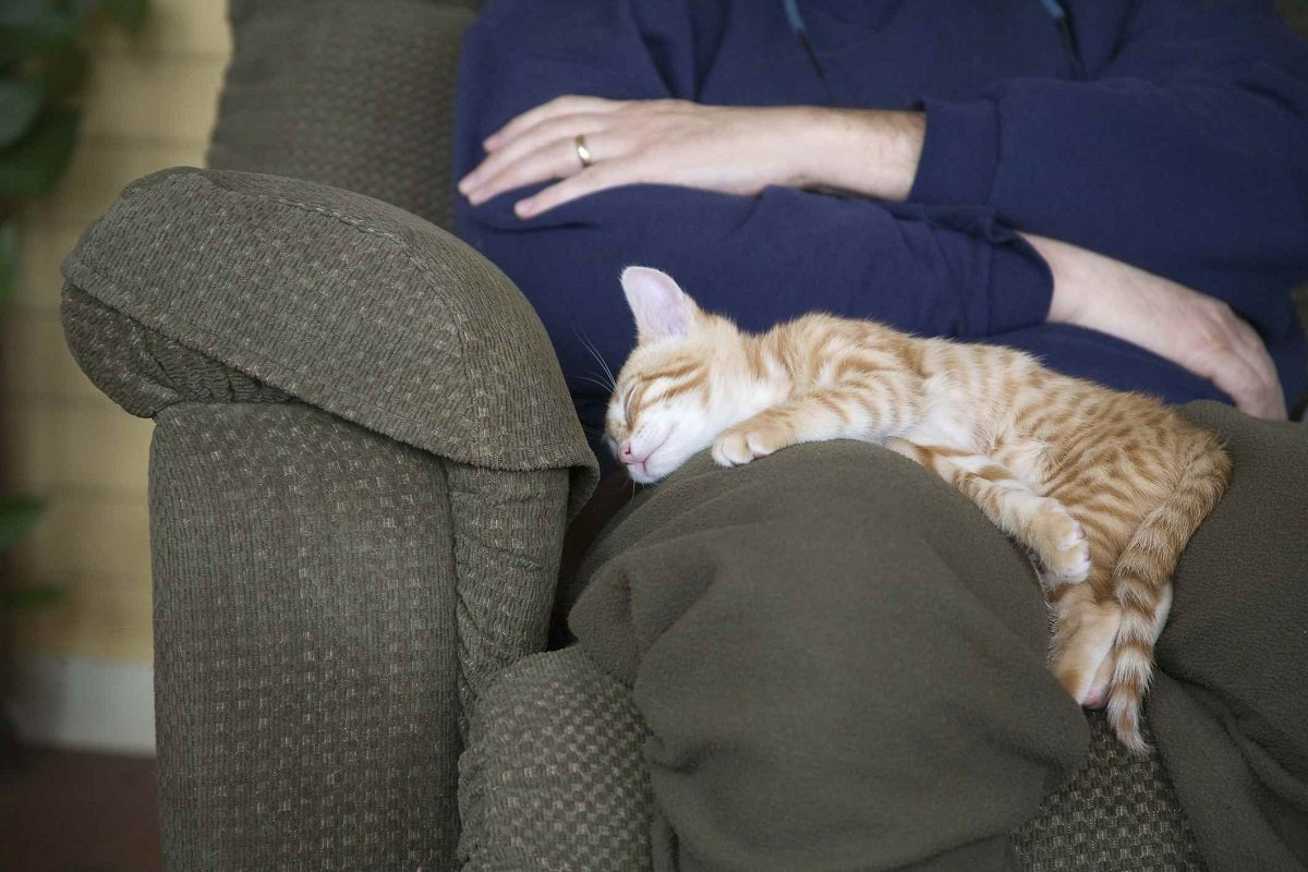 """Как коты показывают, что они вас любят – 11 """"люблю"""" на кошачьем языке"""