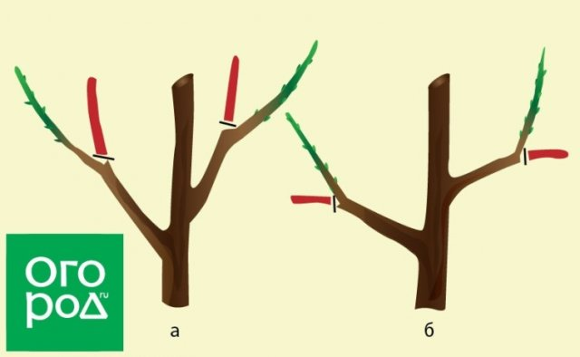 Обрезка деревьев: знай где, как и зачем резать!