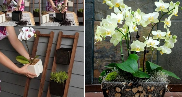 Как засадить весь дом орхидеями