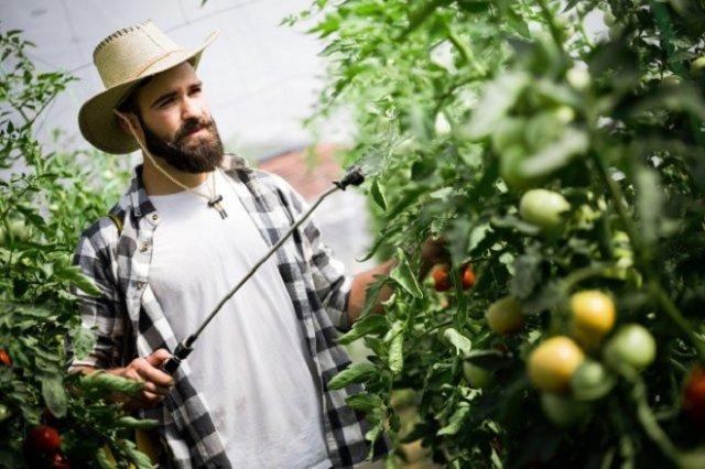 ТОП-40 ошибок при выращивании томатов: грабли, на которые наступают почти все