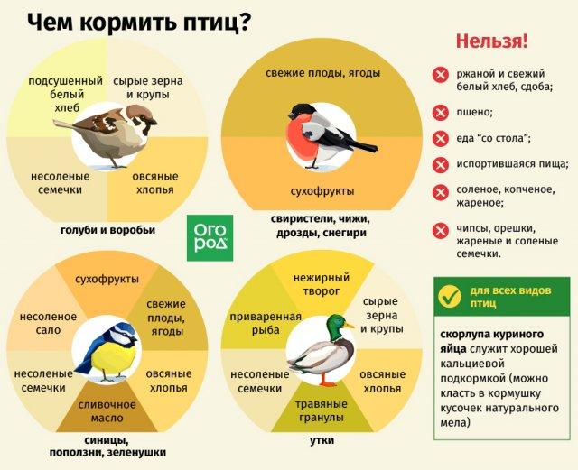 Чем кормить птиц зимой – не навреди!