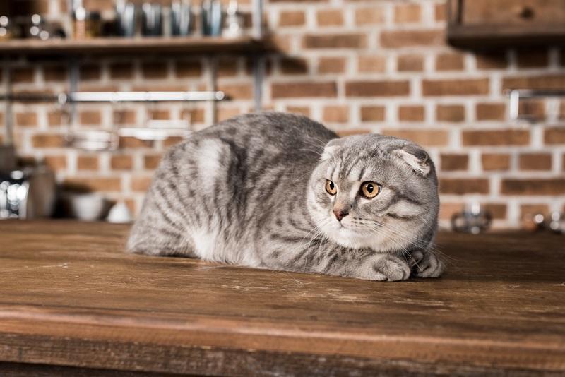 О чём говорит отношение к котам