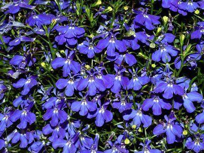 Какие цветы надо сеять на рассаду уже в январе