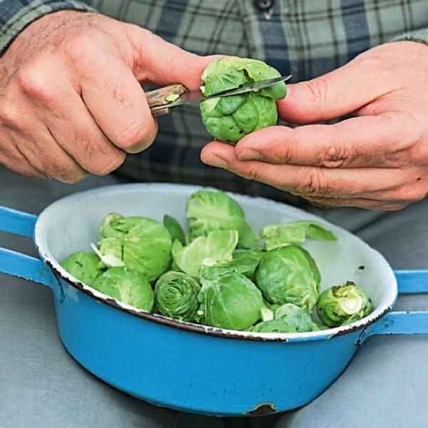 От вершка до корешка: как рационально использовать овощные отходы