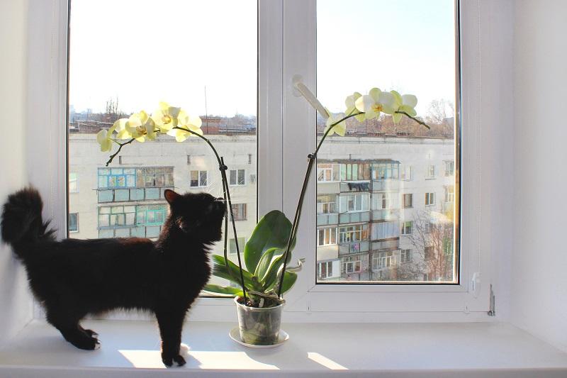 Как простимулировать цветение орхидеи