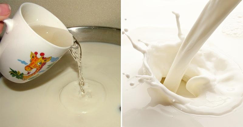 Домашний твердый сыр из молока для большой семьи