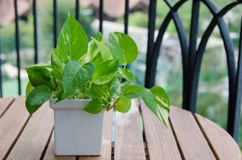 Какие растения очистят воздух как пылесос